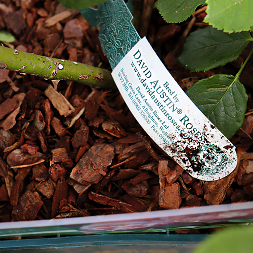 David Austin Roses choose Dura-ID as their preferred supplier for license tags thumbnail