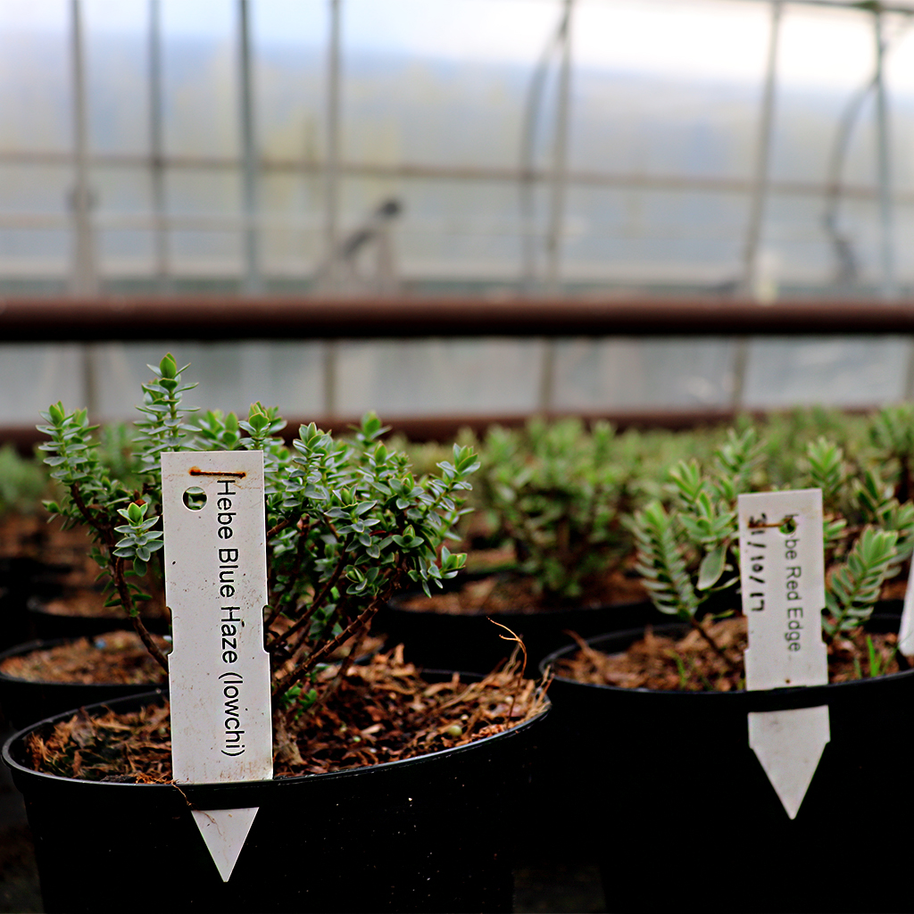 Stic-in tags in pots at a growing nursery