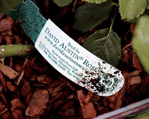 David Austin Roses bespoke loop lock label