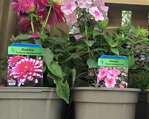 Plant picture stick-in label in plant pot