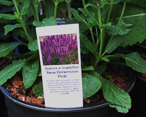 Stick-in label in plant pot